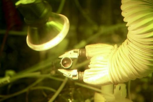五十克的鈈-238放射性同位素樣本