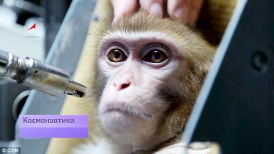 特選的猴子正在接受相關的訓練