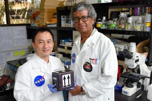 送往國際太空站的小巢狀麴菌儲存箱