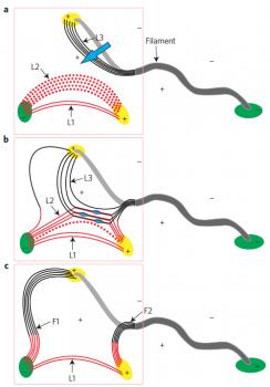 爆發暗條和冕環之間磁重聯發生過程示意圖